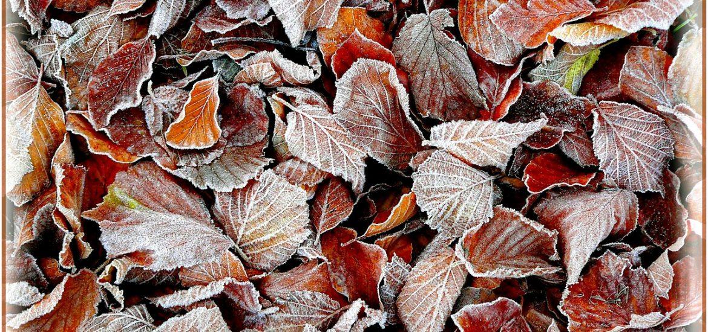 fall-foliage-276807_1280